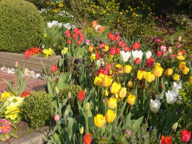 Frühlingsblumen zu Ostern