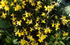 Frühlingserwachen | Der Frühling ist da, im Rheinland in der Kölner Bucht