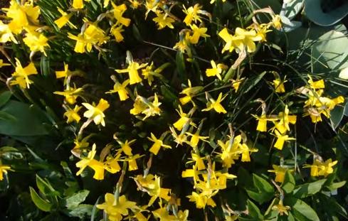 Frühling im Rheinland