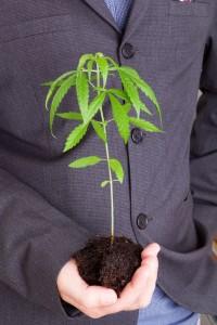 Cannabis stammt aus der Hanf-Wirtschaft